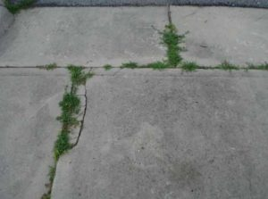 How to remove grass from asphalt driveway